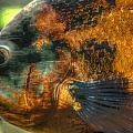 Hdr - Fish by Dem Wolfe