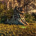 Hdr - Washington Dc National Zoo by Dem Wolfe