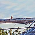 Hdr Bird On A Pipeline II by Lesa Fine