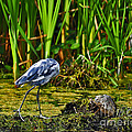Headless Heron by Al Powell Photography USA