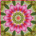 Healing Mandala 25 by Bell And Todd