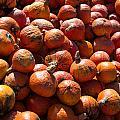 Heap Of Pumpkins by Frank Gaertner