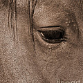 Heart Of A Horse by J L Woody Wooden