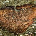 Heart On The Rocks by Jale Fancey