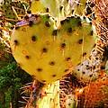 Heart Shaped Cactus by Jennifer Gough
