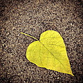 Heart Shaped Leaf On Pavement by Angela Rath