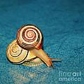 Heart Snails by Aimelle
