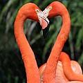 Heart To Heart Flamingo's by Sabrina L Ryan