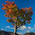Heart Tree by Jonathan Steele