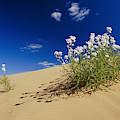 Hearty Wild Stock Wildflowers Growing by Jason Edwards