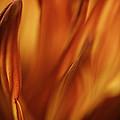 Heat  by Mitch Shindelbower