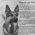 Heaven Can Wait by Sue Long