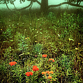 Heaven In The Gloom I - Blue Ridge Parkway by Dan Carmichael