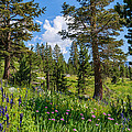 Heaven In The High Country by Lynn Bauer