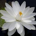 Heavenly Aquatic Bloom by Julie Palencia