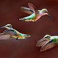 Heavenly Birds by Elizabeth Winter