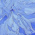 Heavenly Blue Dahlia by Dora Sofia Caputo Photographic Design and Fine Art