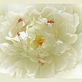 Heavenly Peony With Frame by Bonnie Willis