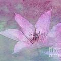 Heavenly Petals by Betty LaRue