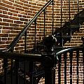 Heceta Head Lighthouse Interior 2 by Bob Christopher