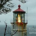 Heceta Head Lighthouse by Nick  Boren