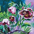 Hellebore Flowers by Jan Bennicoff