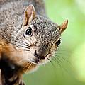 Hello Squirrel by Debi Bishop