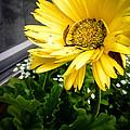Hello Sunshine by Alissa Hobaugh