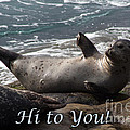 Hello To You Sea Lion by Darleen Stry