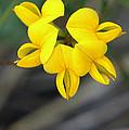 Hello Yellow by Lilliana Mendez