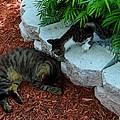 Hemingway Cats by Keith Stokes