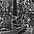 Hemingways Cat by Susanne Van Hulst