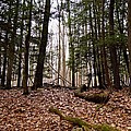 Hemlock Forest by Jake Donaldson