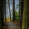 Hemlock Ravine Park by Ken Morris