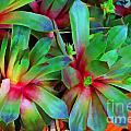 Hen And Chicks  Digital Paint by Debbie Portwood