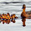 Hen And Gaggle by Paddrick Mackin