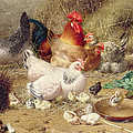 Hens Roosting With Their Chickens by Eugene Remy Maes