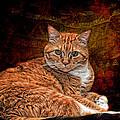 Her Highness by Karen Slagle
