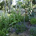 Herb Garden by Design Online