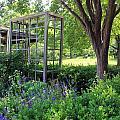 Herb Garden0981 by Carolyn Stagger Cokley