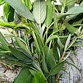 Herbs by Nina Ficur Feenan
