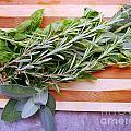 Herbs On Cutting Board by Nina Ficur Feenan