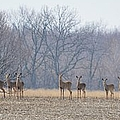 Herd Mentality by Bonfire Photography