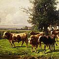Herd Of Cows by Adolf bei Dachau