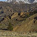 Herd Of Elk   #7740 by J L Woody Wooden