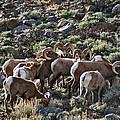 Herd Of Horns by Jeremy Rhoades