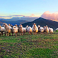 Herd Of Sheep In The Sunset by Weston Westmoreland