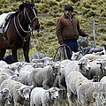 Herding Sheep Patagonia 3 by Bob Christopher