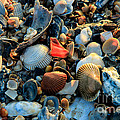 Here A Shell There A Shell by Kathy Szabo