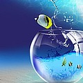 Here Fishy Fishy by Gianfranco Weiss